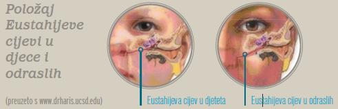 Položaj Eustahijeve cijevi u djece i odraslih - Littledot