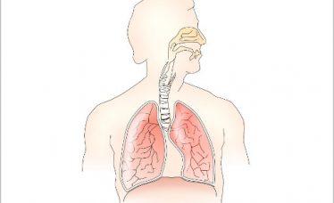 Zdravlje nosa – koliko bitnu ulogu igra u očuvanju cjelokupnog zdravlja?